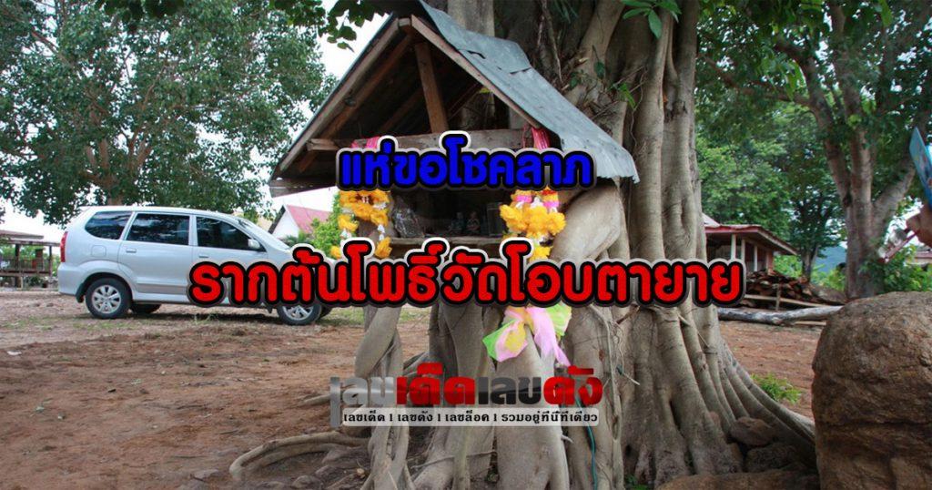 Bodhi Root